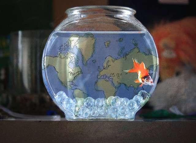 Un poisson a besoin de décors et d'espace pour se sentir bien dans un aquarium. C'est maintenant prouvé scientifiquement ! © -Fearless-, Flickr