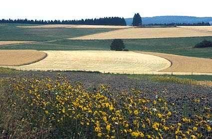 Le remembrement donne naissance à des paysages agricoles dépourvus de végétation haute. Il est une cause de la débocagisation. © Territoire-de-Belfort.gouv.fr