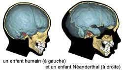 Comparaison par ordinateur de l'Homme de Néandertal et de l'Homme moderne