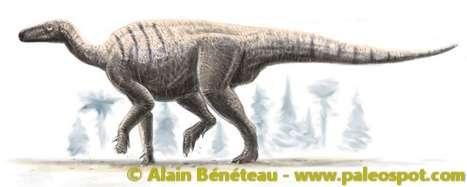 Reconstitution d'un Iguanodon. Ce dinosaure ornithischien pesait jusqu'à quatre tonnes. © Alain Bénéteau