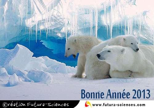 Les ours polaires souhaitent aux humains de bien s'occuper de la planète en 2013. Toutes nos cartes de vœux, derrière ce clic. © Futura-Sciences
