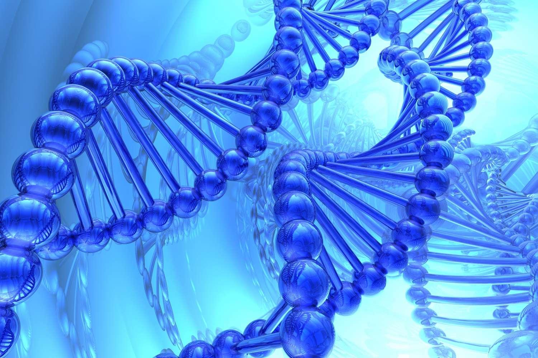 Le Genome analysis toolkit (GATK), un ensemble de logiciels pour le séquençage du génome, a été développé au Broad Institute. © Suravid, shutterstock.com