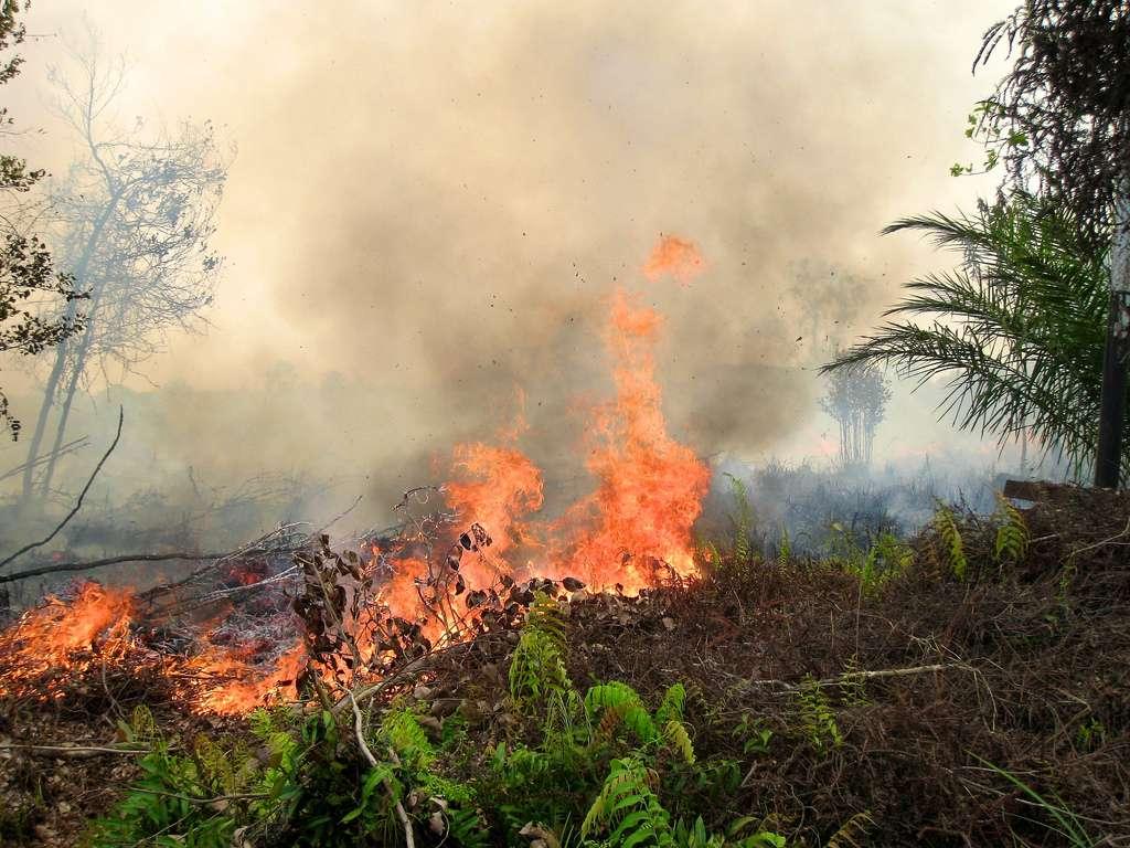 Les feux de forêts réalisés pour défricher des terrains auraient libéré 1.069 téragrammes (Tg) de carbone durant l'épisode El Niño de 1997. Seuls 21 Tg ont été émis en 2000, une année marquée par la survenue de La Niña. Cette photographie a été prise à Palangkaraya, en Indonésie, en septembre 2011. © Cifor, Flickr, CC by-nc-nd 2.0