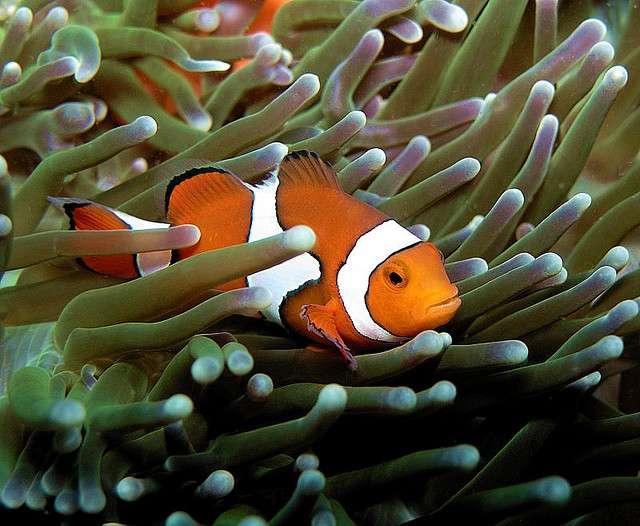 Les nageoires représentent un caractère ancestral par rapport aux quatre membres des tétrapodes. © Boogies with fish, Flickr, cc by nc nd 2.0