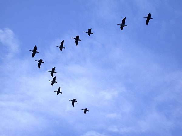 Les oiseaux habitant un lieu constituent son avifaune. © cemisis.org