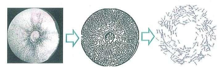 Les motifs de l'écorce de melon sont scannés puis leur structure est modélisée pour créer une empreinte numérique unique pour chaque fruit. © Nec