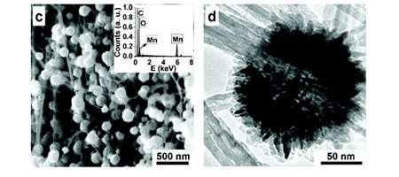 A gauche, les fleurs de manganèse fixées aux nanotubes vues au microscope électronique à balayage. A droite, gros plan sur une fleur avec un microscope à transmission. © 2008 American Chemical Society