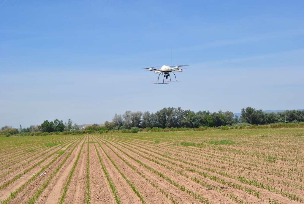 En Europe, les herbicides représentent 40 % des produits phytosanitaires épandus par les agriculteurs sur leurs cultures. Ici, le quadricoptère prend des images multispectrales à partir desquelles un logiciel va automatiquement dresser une carte précise des zones de la parcelle à traiter, afin d'éviter les gaspillages. © CSIC