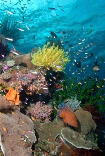 Un récif corallien plein de vie le long de la côte nord-est de l'Australie. Environ 54 % des récifs mondiaux seraient menacés de disparition à court ou moyen terme. © AFP photo/Pew Environment Group/Lucy Trippett