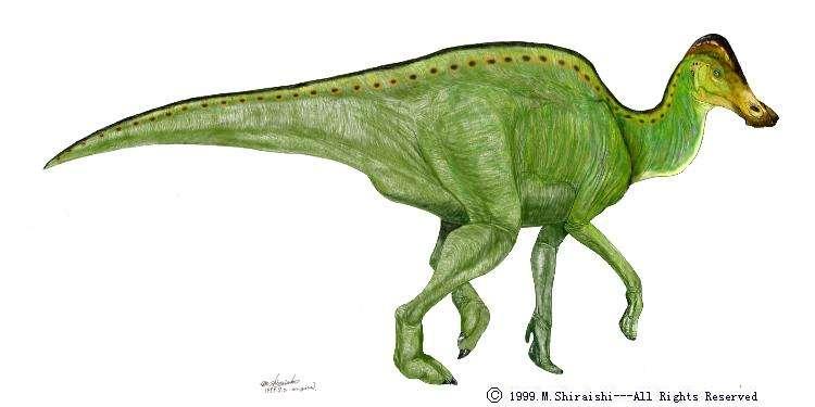 Une représentation d'Hypacrosaure