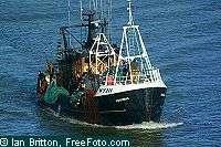 CIEM : réduction des quotas de pêche nécessaire pour préserver les espèces