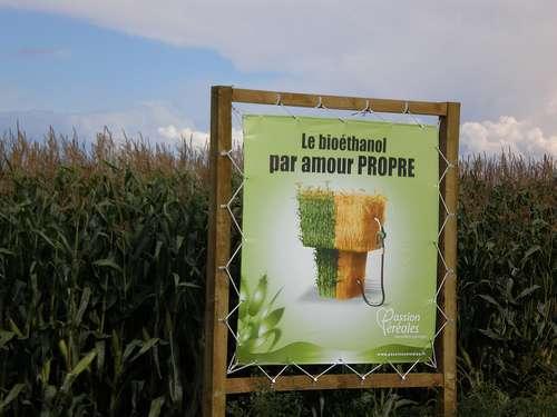 Les cultures destinées à la production d'agrocarburant sont en compétition avec la production de nourriture. © Guy Leboutte CC by-nd