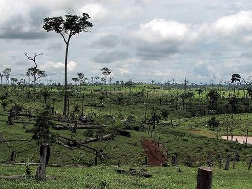 La lutte contre la déforestation au Brésil a un coût que les crédits carbone pourraient compenser. © visionshare CC by-nc