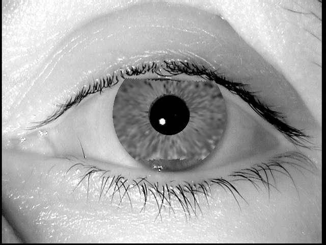 Cette image numérique, créée à partir de l'algorithme mis au point par les équipes de Javier Galbally, a réussi à tromper un système de sécurité aussi évolué que le VeriEye de Neurotechnology, qui l'a prise pour la photo d'un véritable iris correspondant à un enregistrement de sa base de données. © Javier Galbally/Biometric Recognition Group