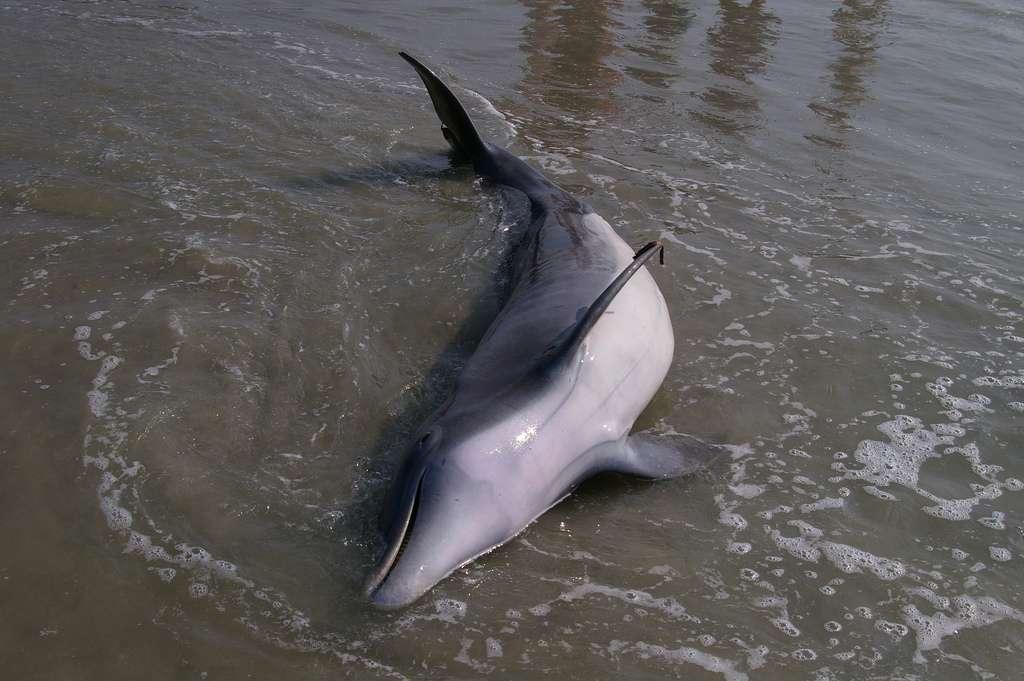 Des dispositifs existent pour repousser les dauphins afin d'éviter les accidents de pêche, mais sont peu répandus. © Lorda, Flickr, cc by sa 2.0
