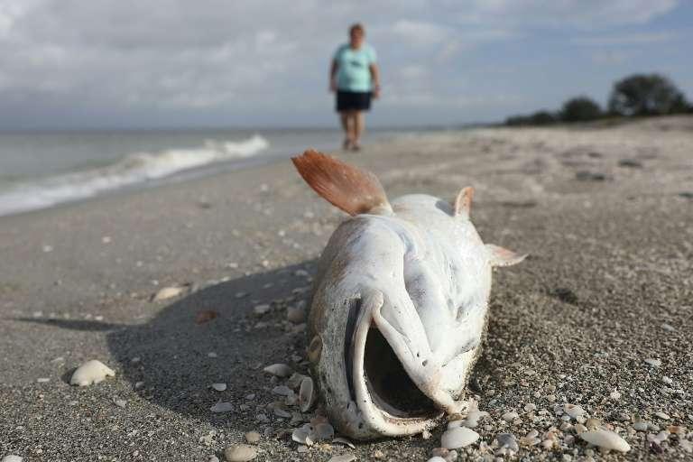 Près d'un million de poissons ont été retrouvés morts dans des fleuves d'Australie. Ils auraient succombé à la sécheresse selon le gouvernement, à une mauvaise gestion de l'eau selon des scientifiques. © Joe Raedle - Getty Images North America/AFP/Archives