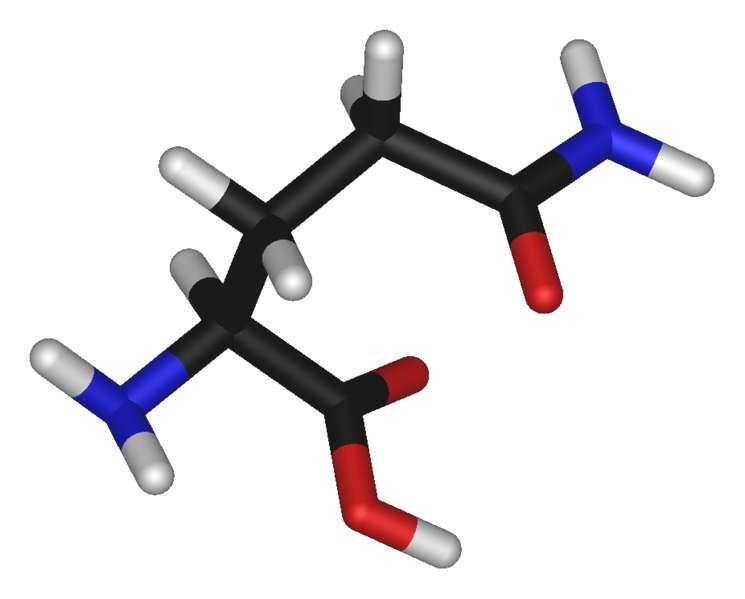 La glutamine est un acide aminé (carbone en noir, oxygène en rouge, azote en bleu et hydrogène en blanc). © domaine public