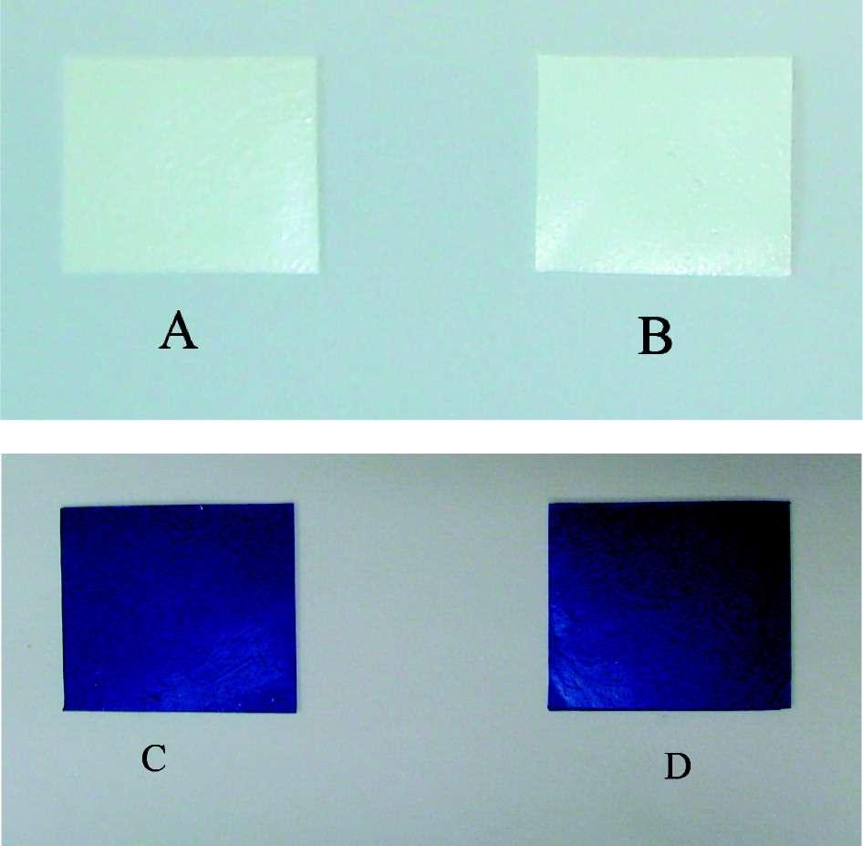 La présence de N-halamines altère-t-elle la qualité de la peinture ? Non, répondent les auteurs, qui montrent deux tests après exposition à l'air libre, de deux bleus différents, sans N-halamines (à gauche) et avec (à droite). Crédit : American Chemical Society
