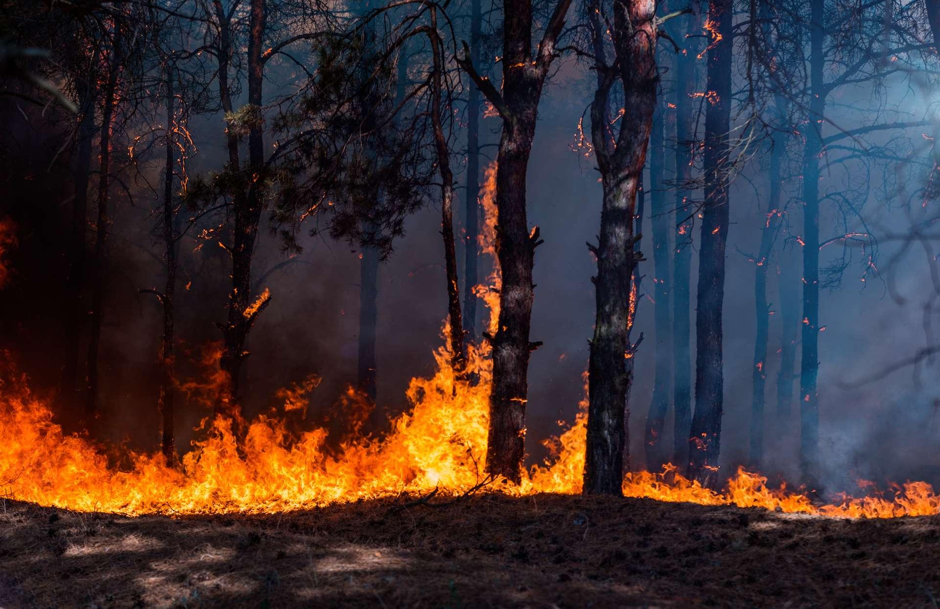 D'année en année, le réchauffement climatique aggrave le nombre de départs de feu et leur intensité. © yelantsevv, Adobe Stock