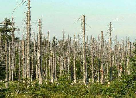 Forêt ravagée par les pluies acides. Image libre de droits