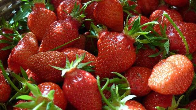 La Gariguette est une variété de fraises d'origine française. © Philippe de France, Flickr, CC by-nc-sa 2.0