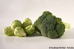 Les brocolis et les choux de Bruxelles seraient bénéfiques contre le cancer. © Aurélien Pottier / Fotolia