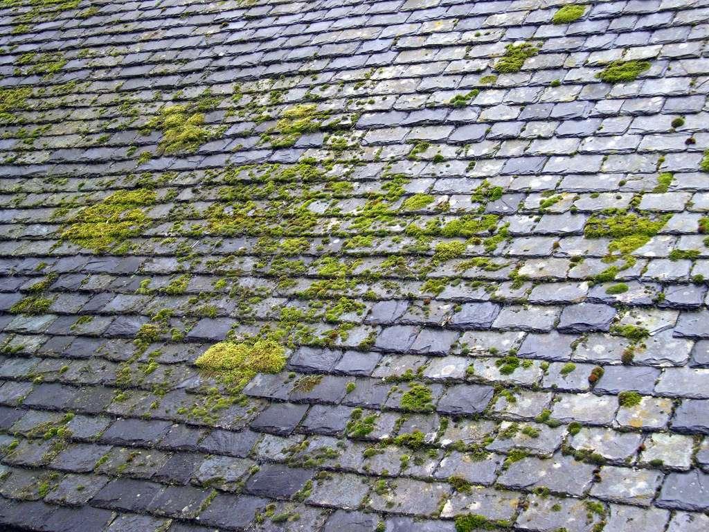 Le démoussage du toit permet un bon entretien de votre toiture. © selkovjr, Flickr, CC BY 2.0