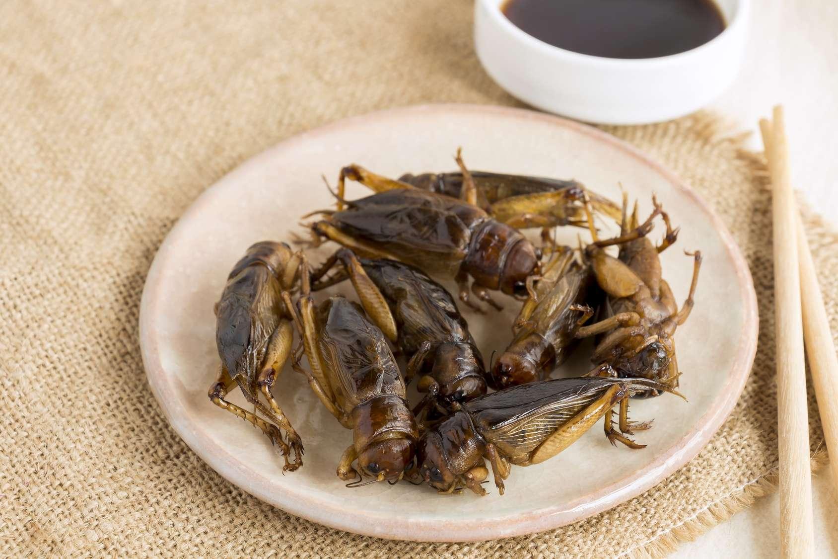 Les insectes, une excellente source d'antioxydants, protéines, minéraux et acides aminés. © nicemyphoto - Fotolia