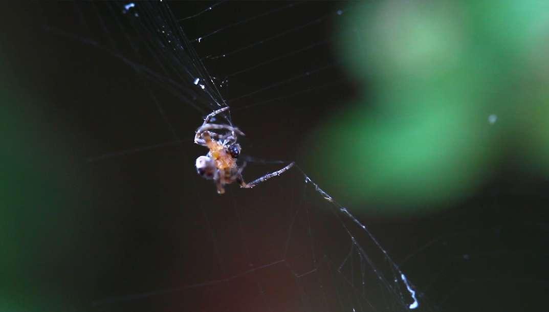 La peur des araignées, une attitude bien injuste... et bien inutile