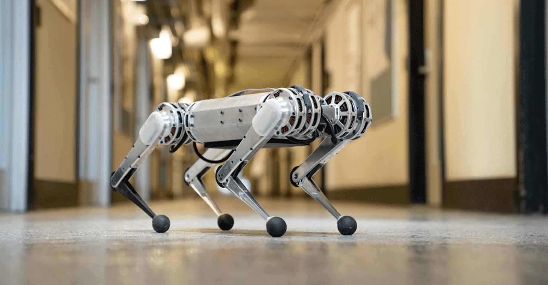 Le robot mini Cheetah, mis au point par des ingénieurs du MIT (Massachusetts Institute of Technology), montre une fois de plus son agilité en jouant au foot avec des coéquipiers, eux-mêmes robots, sur les pelouses de l'université. © Bryce Vickmark, MIT