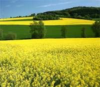 Le végétal peut-il être une solution de remplacement au pétrole ? © DR