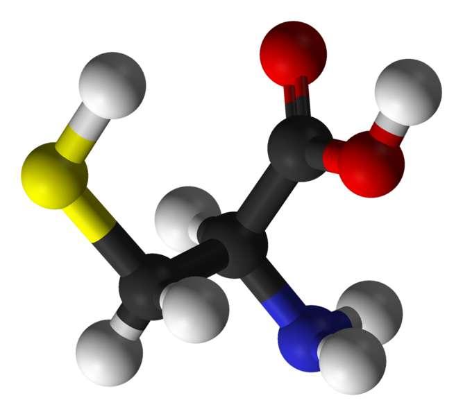 La cystéine est un acide aminé qui contient un atome de soufre (carbone en noir, oxygène en rouge, azote en bleu, hydrogène en blanc et soufre en jaune). © Photohound, domaine public