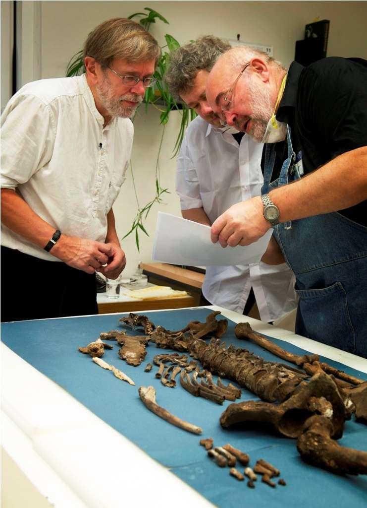 Le squelette de Tycho Brahe, examiné le 18 novembre 2010. © Jacob C. Ravn, Aarhus University