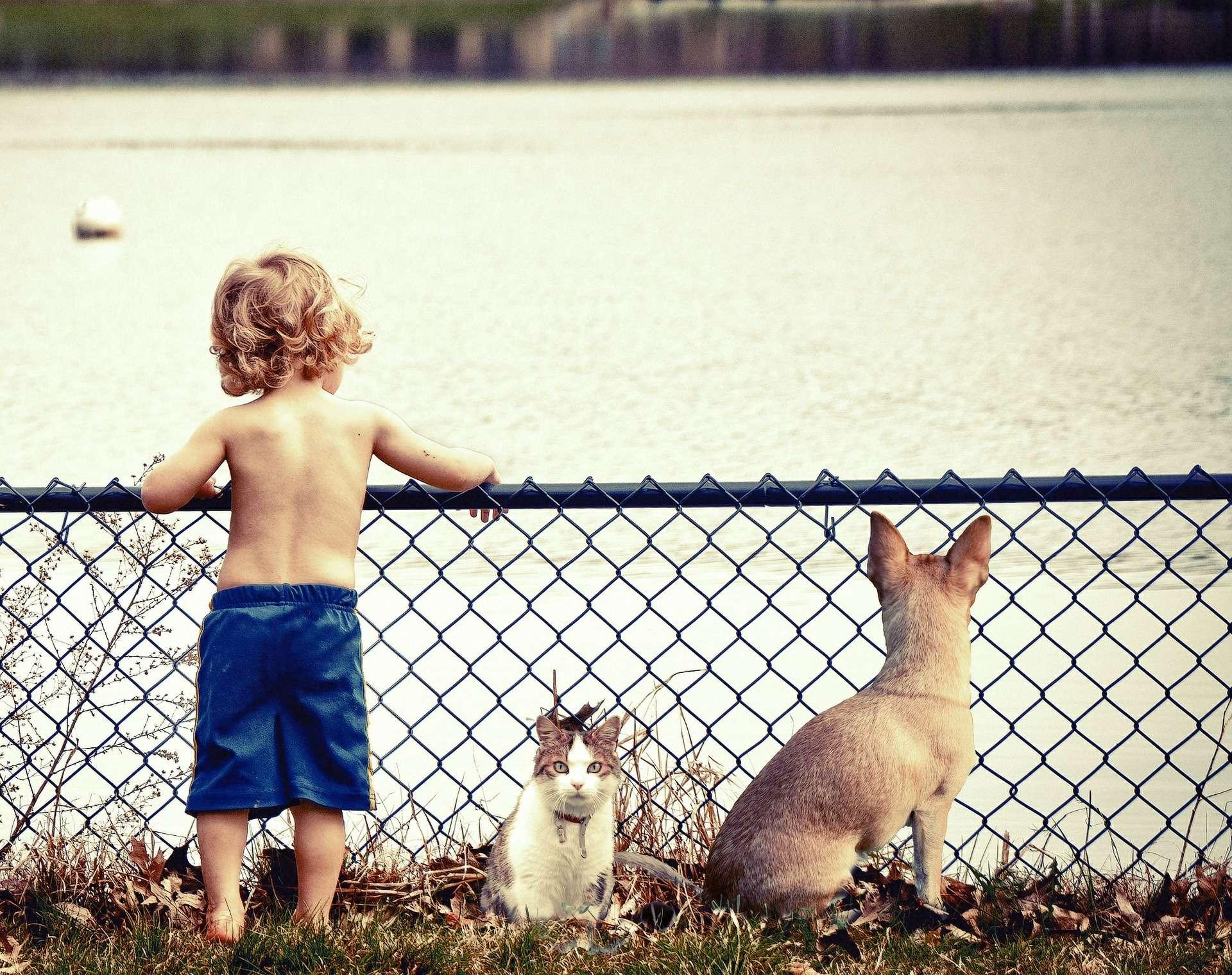 Lorsqu'il est stressé, un chat a besoin de son humain pour se sentir en sécurité. © The Pixelman, Pixabay