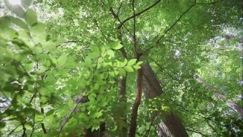 Le hêtre des forêts auvergnates, un nid de biodiversité