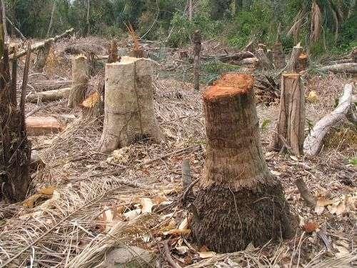 Déforestation en Bolivie. Source : World Prout Assembly