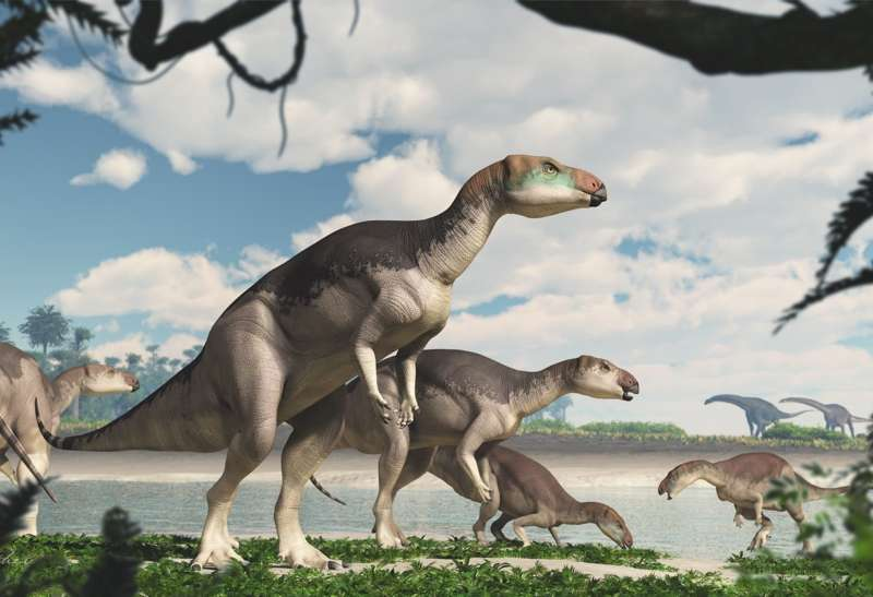 Vue d'artiste du dinosaure iguanodonte Fostoria dhimbangunma qui vivait en Australie il y a 100 millions d'années, au milieu du Crétacé. © James Kuether