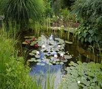 Les clés pour construire un bassin de jardin. © bassins-de-jardins-wifeo.com