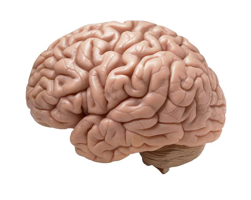 Les spécialistes parlent de microcéphalie lorsque le périmètre crânien est inférieur d'au moins trois écarts types par rapport à la mesure moyenne. © DJ, Flickr, cc by sa 2.0