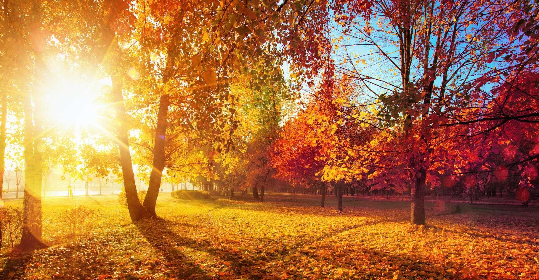 Ce mercredi 22 septembre 2021, à 21 heures 21, ce sera l'automne. © Pasko Maksim, Adobe Stock