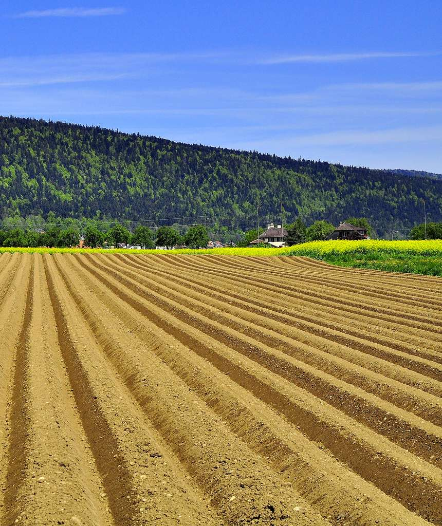 Le sol est à l'interface entre la biosphère et la lithosphère, c'est-à-dire l'enveloppe terrestre rigide de notre planète. © Jojo2046, Flickr, cc by nc nd 2.0