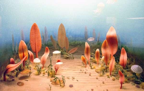 Une reconstitution des espèces vivantes dans les océans de la période d'Ediacara selon une vitrine du Smithsonian Museum. Crédit : P.-A. Bourque
