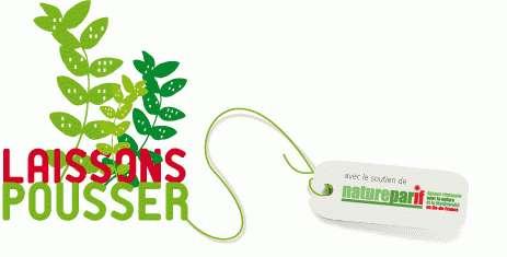 Une initiative pour inciter les citoyens à planter des fleurs sauvages dans les espaces publics pour s'approprier la ville, redécouvrir la nature et améliorer le cadre de vie. © Laissons pousser !