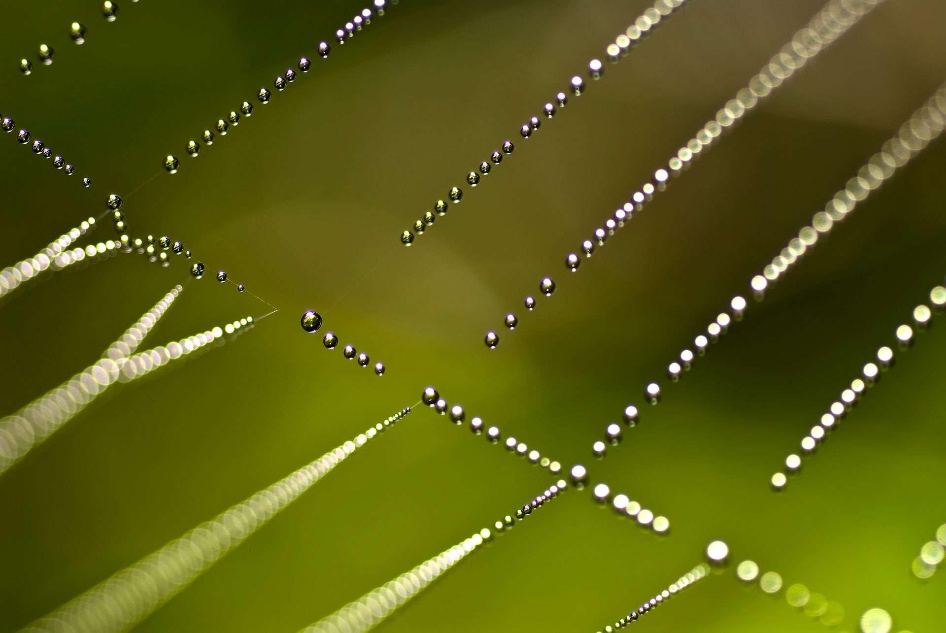 La rosée du matin forme des gouttes d'eau sur une toile d'araignée. © alessandrozocc