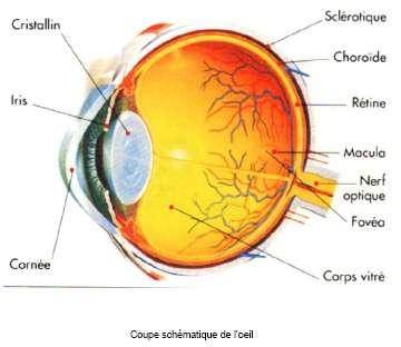 Des caroténoïdes contre les maladies oculaires