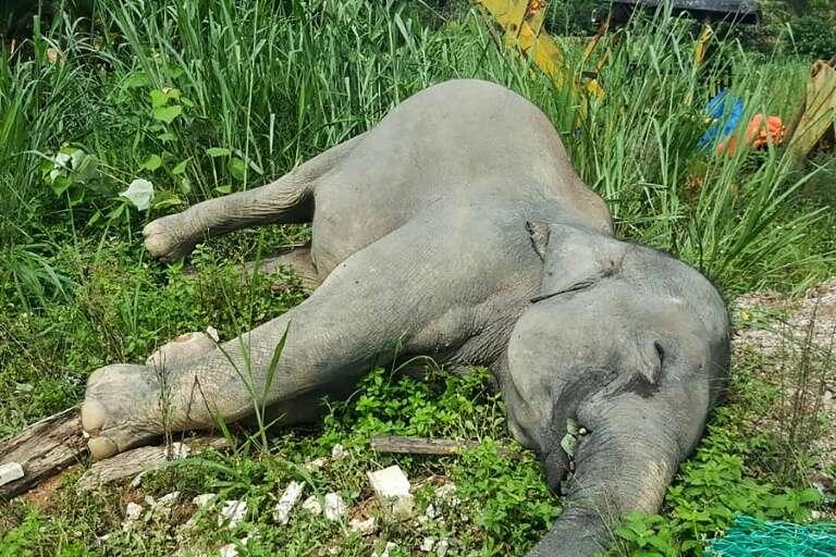 Un éléphant mort à Kluang, dans l'État de Johor dans le sud de la Malaisie, sur une photo non datée fournie par le Département des parcs nationaux et de la faune sauvage le 7 juin 2019. © Handout - Malaysia Department of Wildfife and National Parks/AFP