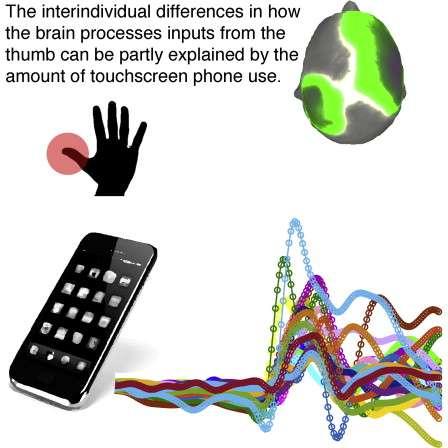 Une équipe de chercheurs de l'université de Zurich a étudié l'influence de l'utilisation du smartphone sur le cerveau et plus particulièrement la zone du cortex associée au toucher. Ils ont pu corréler l'interaction des doigts (pouce, index, majeur) sur l'écran tactile au développement du cortex somato-sensoriel. © University of Zurich, ETH Zurich