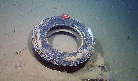 Ce pneu usé a été trouvé par 868 m de fond dans la baie de Monterey, au large de la Californie, où il sert désormais de support pour des organismes qui ne devraient pas vivre là. © Mbari, 2009