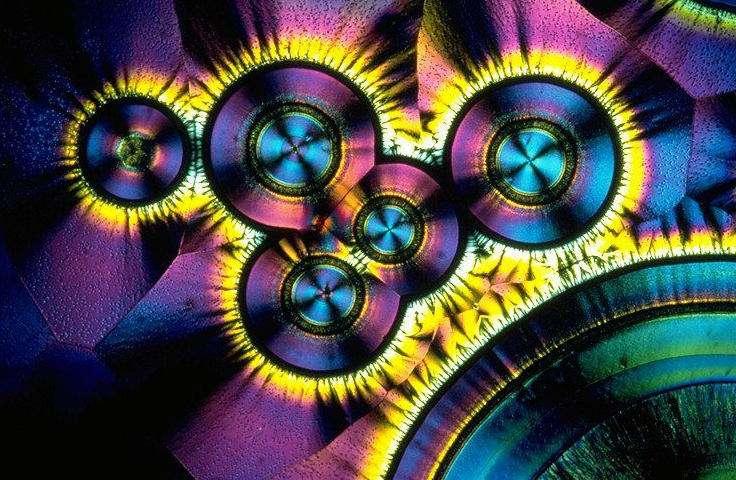 Des cristaux de vitamine C observés au microscope en lumière polarisée. © DR, CC by 1.0