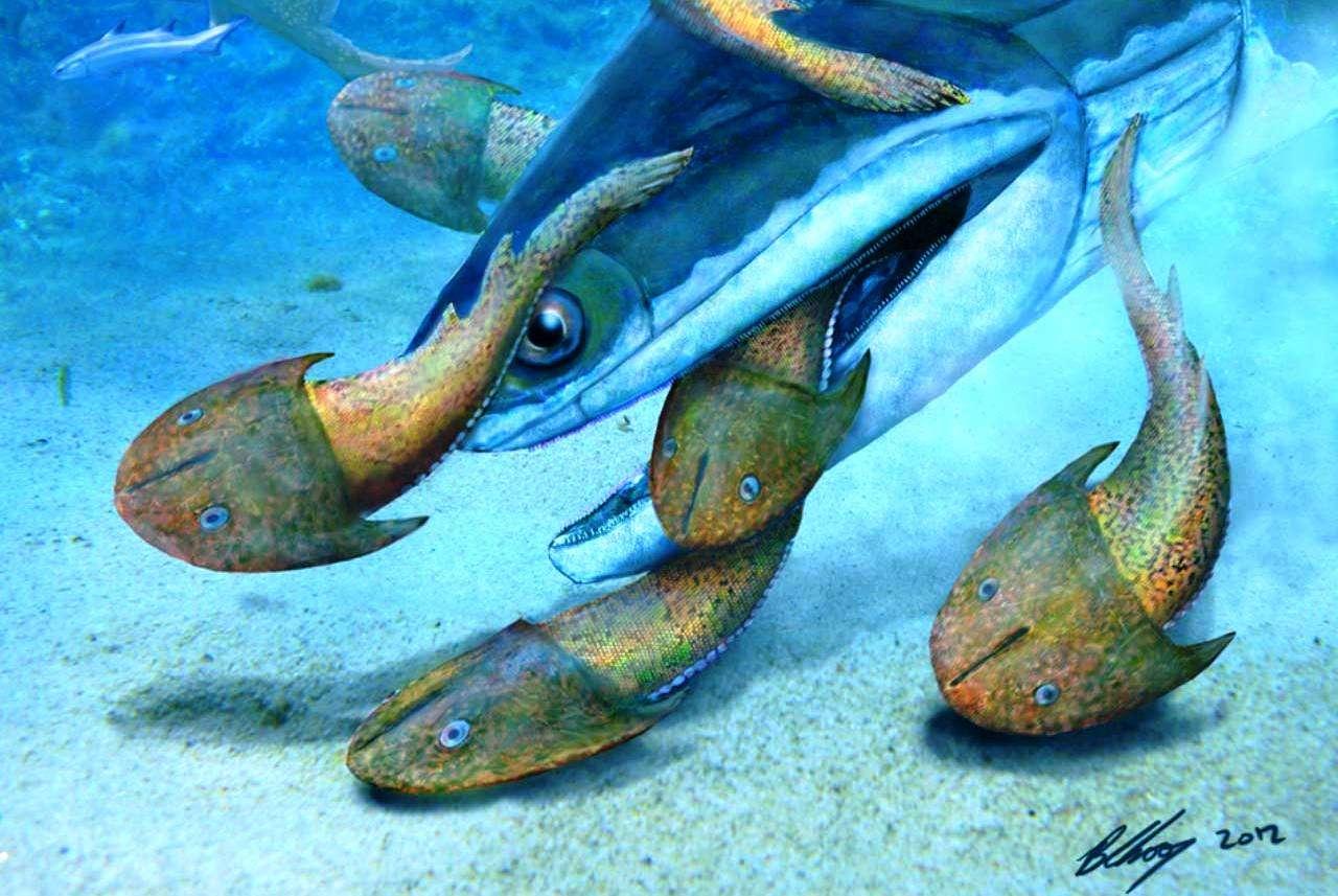 Dans la mer du Silurien, Megamastax amblyodus devait être un redoutable prédateur. Sur cette représentation d'artiste, on le voit dévorer des poissons cuirassés sans mâchoire du nom de Dunyu longiforus. © Brian Cho